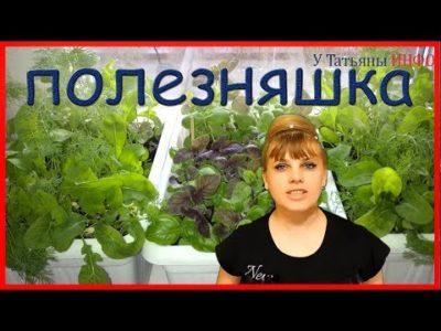как хранить базилик в холодильнике