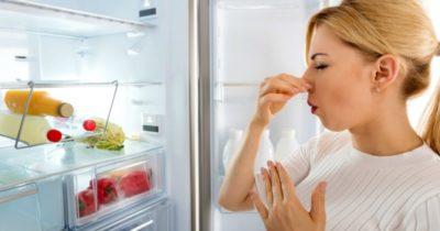 плесень в холодильнике как избавиться